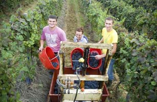 Adriano, Simona & Sorin helping to pick our Barbera bunches