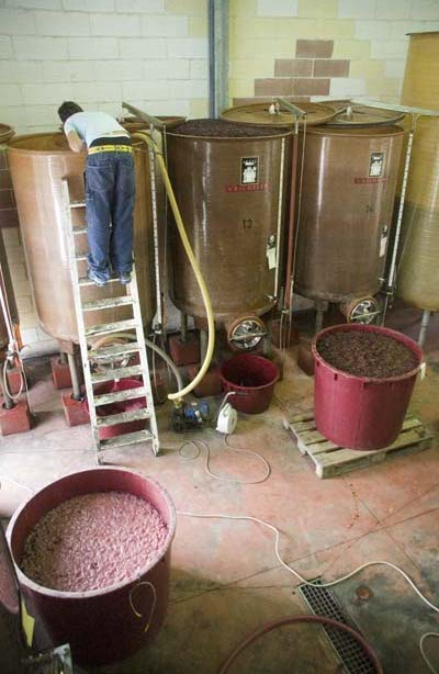 remontage of our wine in the cantina